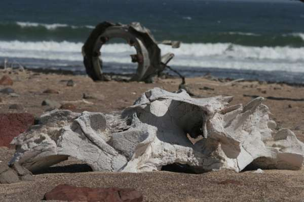 Aircraft wreckage and whale skull on the Skeleton Coast