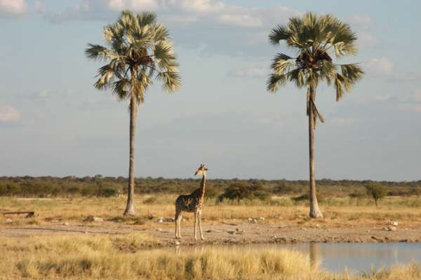 The Etosha Pan National Park is Namibia's premier game reserve for wildlife viewing