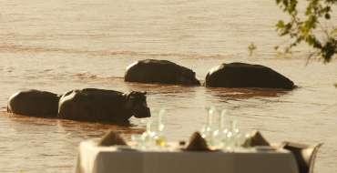 04_Hippos___dinner