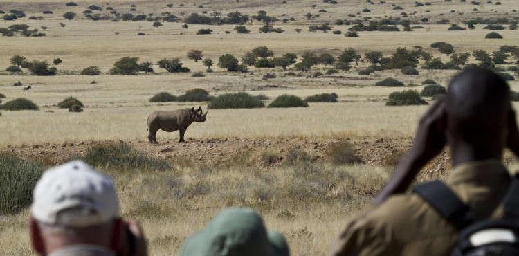 Desert -rhino-camp 1