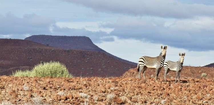 Desert -rhino-camp