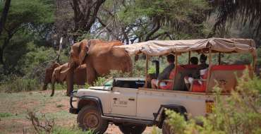 Saruni Samburu - Game Drive - Elephants
