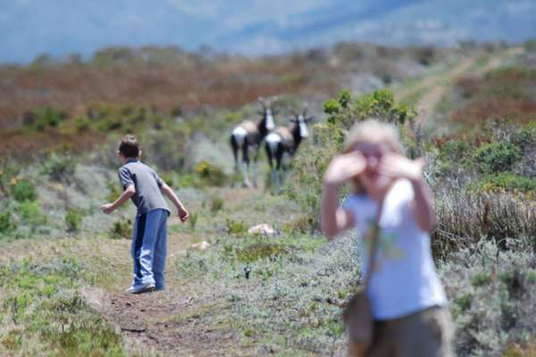 Viewing Bontebok in the Cape Of Good Hope Nature Reserve