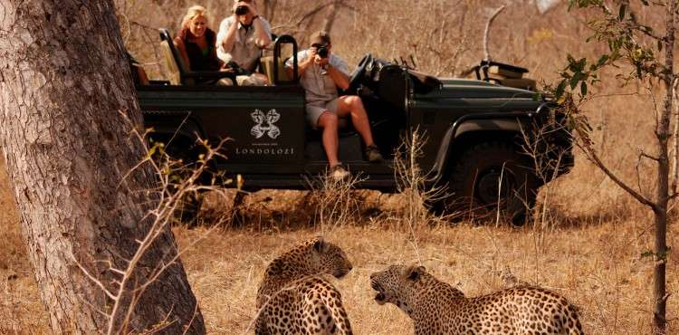 game-drive-safari-south-africa-londolozi