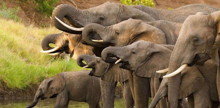 big-five-safari-sabi-sands-elephant