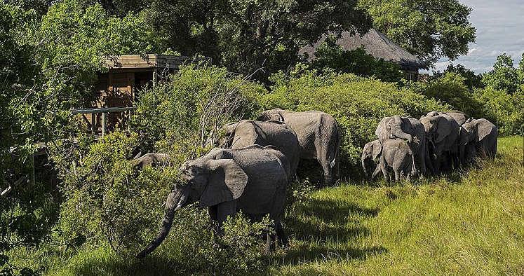 vumbura, stylish safari lodge, botswana
