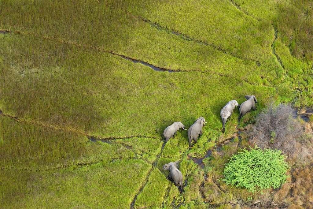 Botswana green season