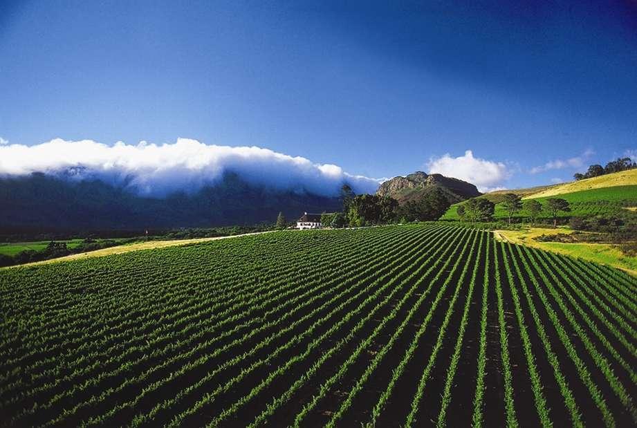 The Cape's wine region.