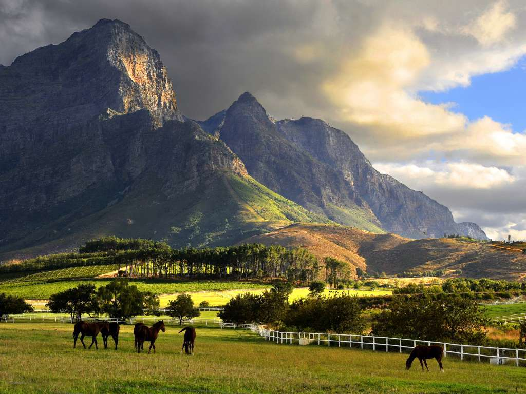 Image result for images of cape winelands