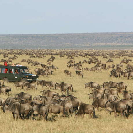 Image of Rekero Camp, Masai Mara National Reserve, Kenya