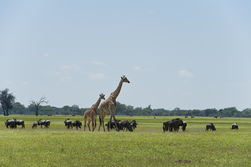 Hwange, green season
