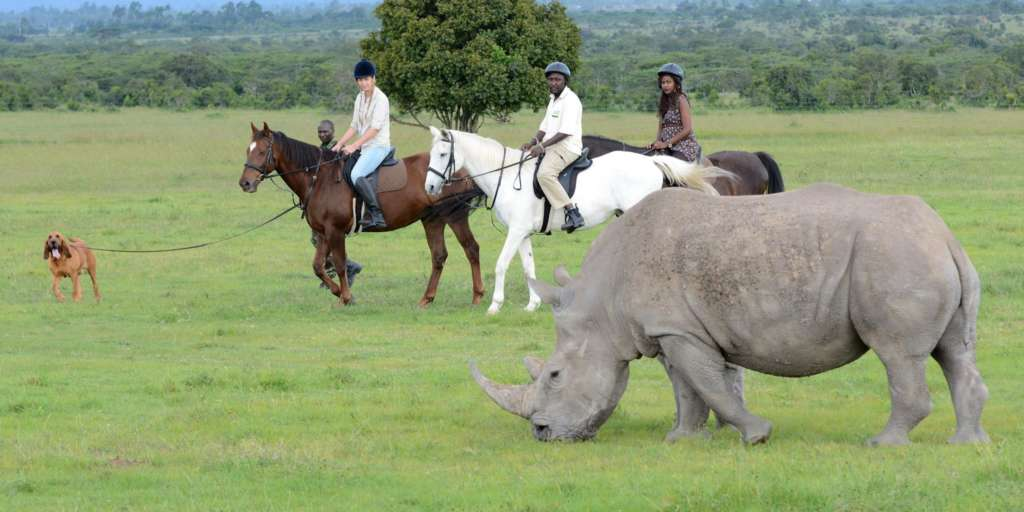 Horse riding with rhinos