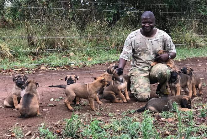 Akagera puppies